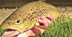 Fishing at Warburton