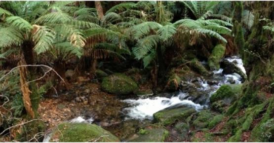 rainforest-warburton