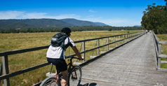 Cycling Tracks in Warburton