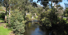 Yarra Walks Warburton